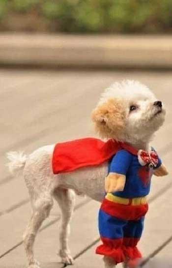 Самые смешные картинки про собак