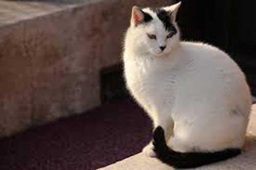 Кот-Гитлер - фото