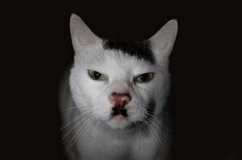 Кот гитлера фото