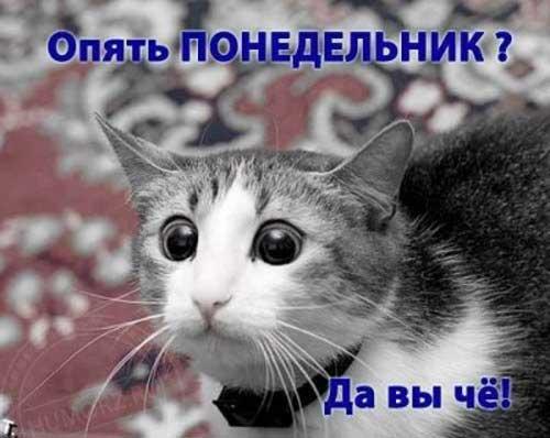 Кот понедельник