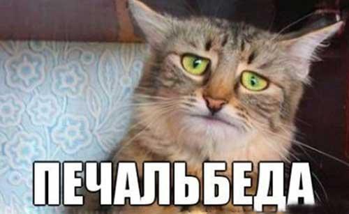 https://www.shmyandeks.ru/wp-content/uploads/2014/02/koti_pechal_beda_8.jpg