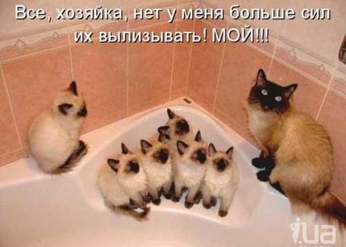 Прикольные котики — Шмяндекс.ру