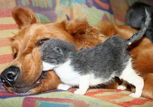 Картинки собак и кошек вместе