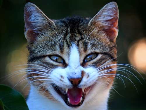 Фото - улыбка кота