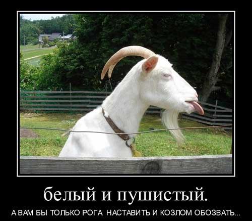 Демотиваторы про козлов