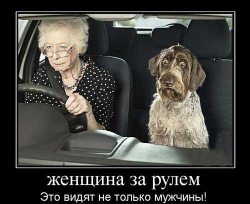картинки смешные за рулем