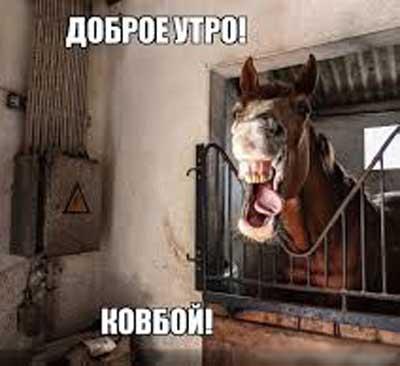 Доброе утро - смешные картинки