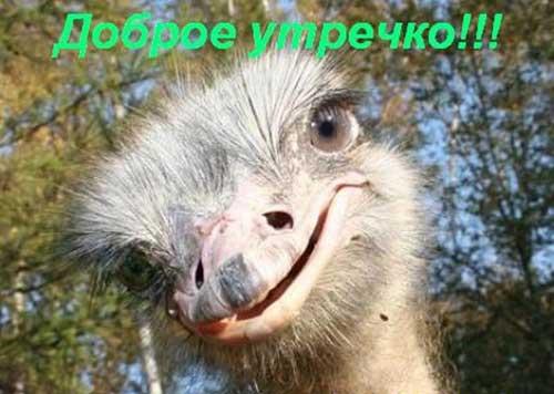 https://www.shmyandeks.ru/wp-content/uploads/2014/03/dobroe_ytro_kartinki_2.jpg