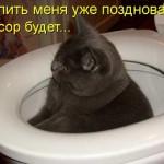 Смешные фото домашних животных