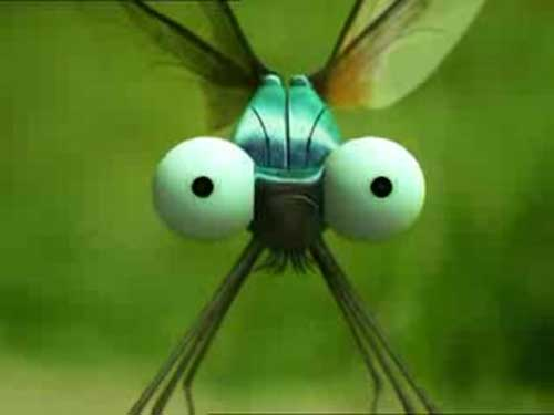 Смешные фото насекомых