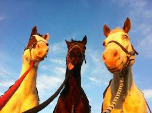 Смешные лошади - фото