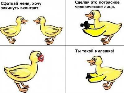 Смешные утки - картинки
