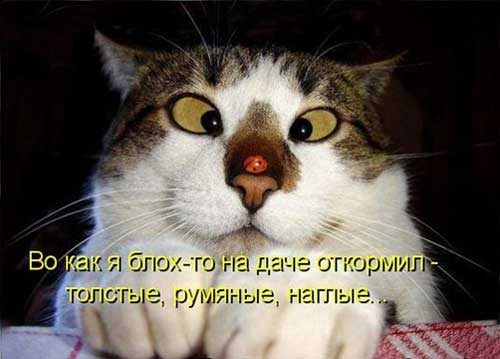 Фото - смешные и позитивные