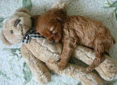Фото прикольных собак