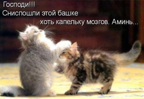 http://www.shmyandeks.ru/wp-content/uploads/2014/05/rja4nie_kartinki_jivotnih11.jpg