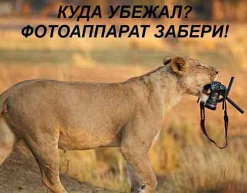 Ржачные картинки животных из надписями