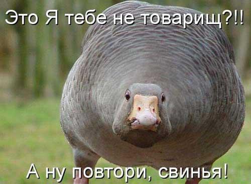 Ржачные картинки животных  со надписями