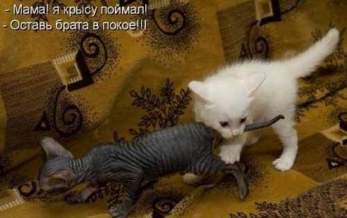 Ржачные картинки животных вместе с надписями