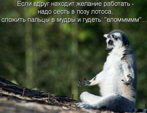 Ржачные картинки животных с надписями