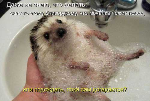 Ржачные картинки животных не без; надписями