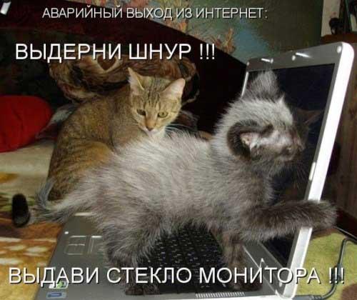 Котоматрица, прикольные коты с надписями