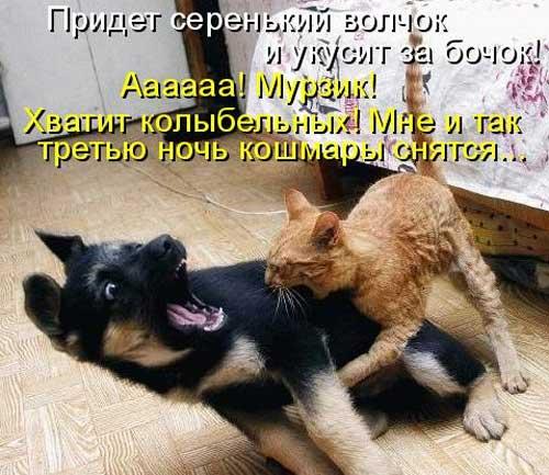 Ржачные картинки животных с надписями ...: www.shmyandeks.ru/rzhachnye-kartinki-zhivotnyx-s-nadpisyami
