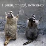 Смешные еноты — фото