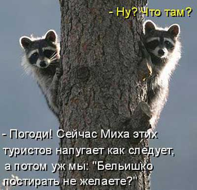 Смешные еноты - фото