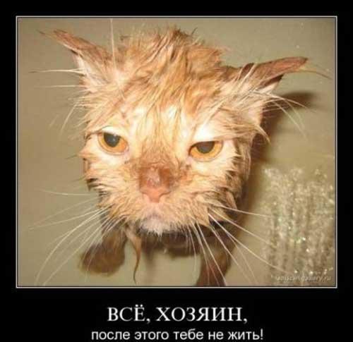 Смешные демотиваторы про котэ