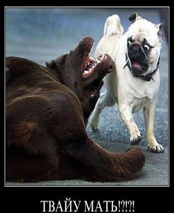 Смешные демотиваторы про собак