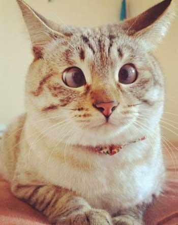 Фото косых котов