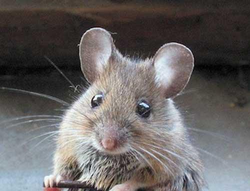 Прикольные фото мышей