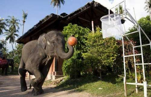 Смешные фото слонов