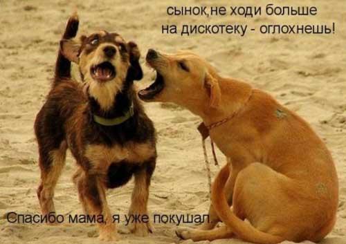 Прикольные фото собак с надписями