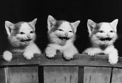 Улыбка котенка