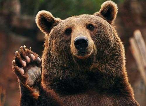 Смешные фото диких животных