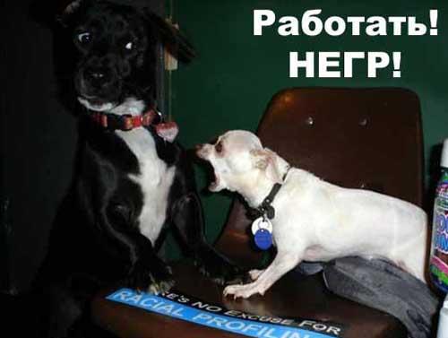 Прикольные фотки с собаками