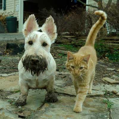 про кошек приколы высказывания