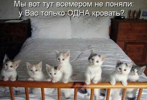 Прикольные картинки котят с надписями