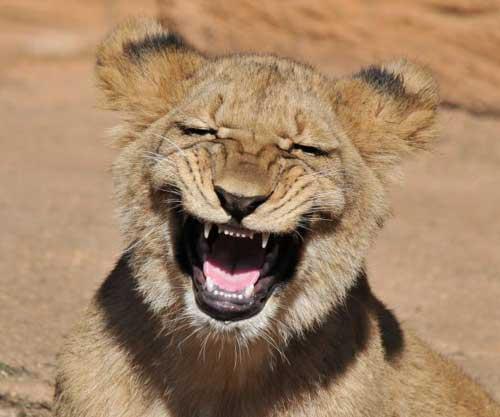 Веселые животные - фото