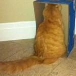 Смешные рыжие коты — фото