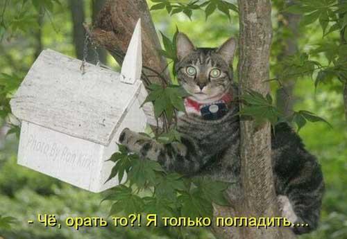 Смешные фотографии животных с надписями