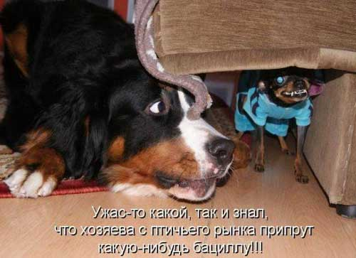 Картинки по запросу смешные картинки про животных с надписью