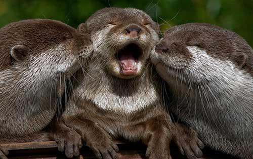 Животные улыбаются - фото