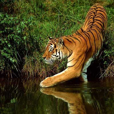 Очень красивые фото животных