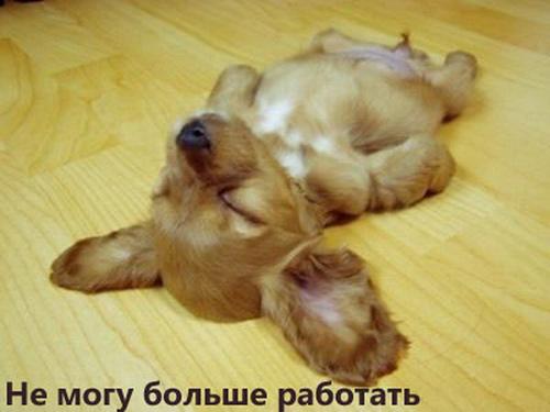 Смешные собачки - видео