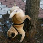 Смешные собачки — видео
