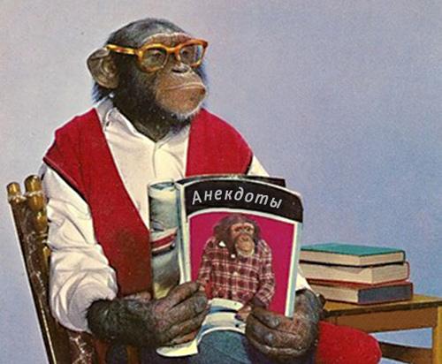 Анекдоты про обезьян