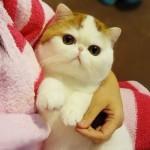 Няшные коты — фото