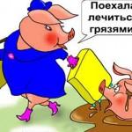 Свиньи — карикатуры